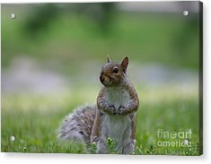 Acrylic Print featuring the photograph Posing Squirrel 2 by David Bishop