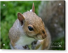 Acrylic Print featuring the photograph Posing Squirrel 3 by David Bishop
