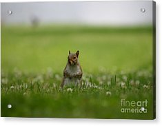 Acrylic Print featuring the photograph Posing Squirrel by David Bishop