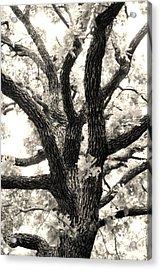 Post Oak Acrylic Print by Jeannie Burleson