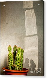 Pot Of Cactus Acrylic Print by Emilio Lovisa
