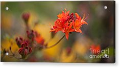 Potential Acrylic Print by Mike Reid