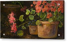 Pots Of Geraniums Acrylic Print by Jimmie Trotter