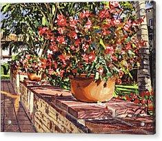 Potted Begonias Santa Barbara Acrylic Print