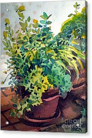 Potted Herbs Acrylic Print by Donald Maier