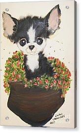 Potted Pup Acrylic Print by Rachel Carmichael