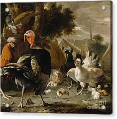 Poultry Yard Acrylic Print by Melchior de Hondecoeter