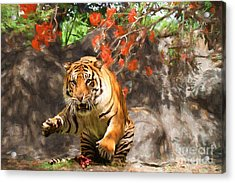 Pounce Acrylic Print by Judy Kay