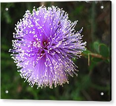 Purple Orb Acrylic Print by Mary Ellen Frazee