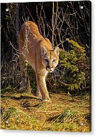 Power And Grace Acrylic Print by Jack Bell