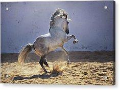 Power In Motion Acrylic Print by Ekaterina Druz