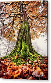 Power Of Roots Acrylic Print