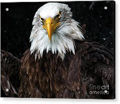 Power Of The Eagle Acrylic Print