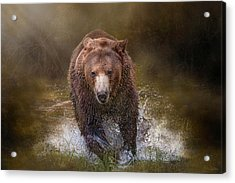 Power Of The Grizzly Acrylic Print
