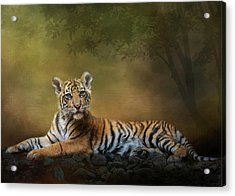 Practicing My Big Kitty Stare Acrylic Print