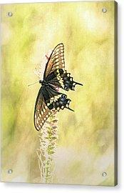 Prairie Butterfly 2 Acrylic Print