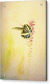 Prairie Butterfly 3 Acrylic Print