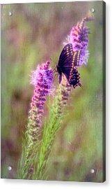 Prairie Butterfly Acrylic Print