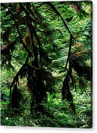 Prairie Creek Redwoods State Park 12 Acrylic Print