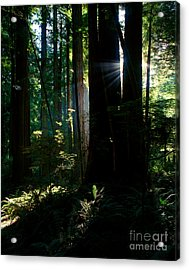 Prairie Creek Redwoods State Park 6 Acrylic Print