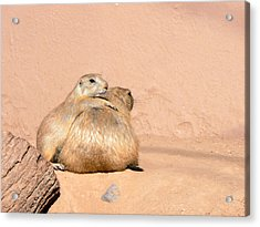 Prairie Dog Friends Acrylic Print by Laurel Powell