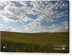 Acrylic Print featuring the photograph Prairie Field by Wilko Van de Kamp