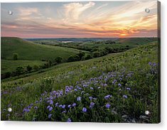 Prairie In Bloom Acrylic Print