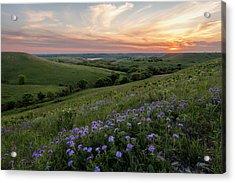 Prairie In Bloom Acrylic Print