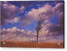Prairie Tree Survivor Acrylic Print by Anna Louise