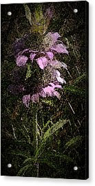 Prairie Weed Flower Acrylic Print by Donna G Smith
