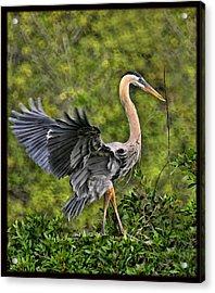 Prancing Heron Acrylic Print by Shari Jardina