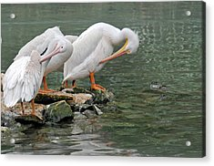 Prayer Of The Pelicans Acrylic Print by Teresa Blanton