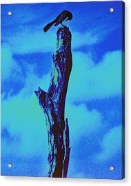 Praying Black Bird Grace In Nature Acrylic Print