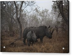 Pre Dawn Encounter Acrylic Print by Andre Victor