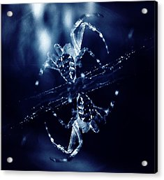 Acrylic Print featuring the digital art Predators  by Fine Art By Andrew David