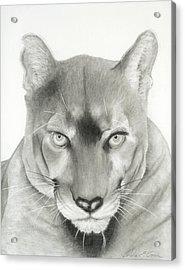 Predator Acrylic Print