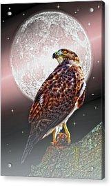 Predator Acrylic Print by Tom York Images