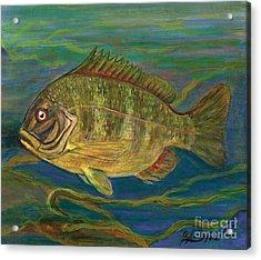 Predatory Fish Acrylic Print