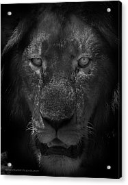 Preditor Eyes Acrylic Print