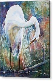 Preening Egret Acrylic Print