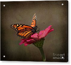 Prefect Landing - Monarch Butterfly Acrylic Print by Judy Palkimas