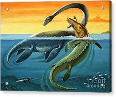 Prehistoric Creatures In The Ocean Acrylic Print by English School