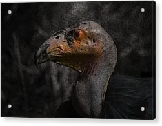 Prehistoric Acrylic Print by David Gn