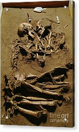 Prehistoric Skeletons Acrylic Print by Science Photo Library