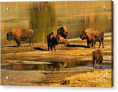 Acrylic Print featuring the photograph Preparing To Cross The Yellowstone River by Adam Jewell