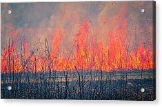 Prescribed Burn 3 - Uw Arboretum - Madison - Wisconsin Acrylic Print by Steven Ralser