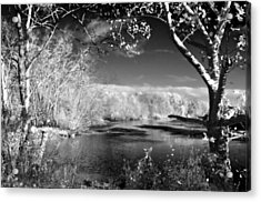 Presence  Acrylic Print by Thomas  MacPherson Jr