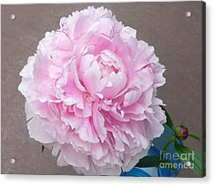 Pretty And Pink Acrylic Print by Barb Montanye Meseroll
