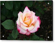 Pretty Bloom Acrylic Print by Gerald Mitchell