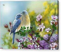 Pretty Blue Birds Acrylic Print
